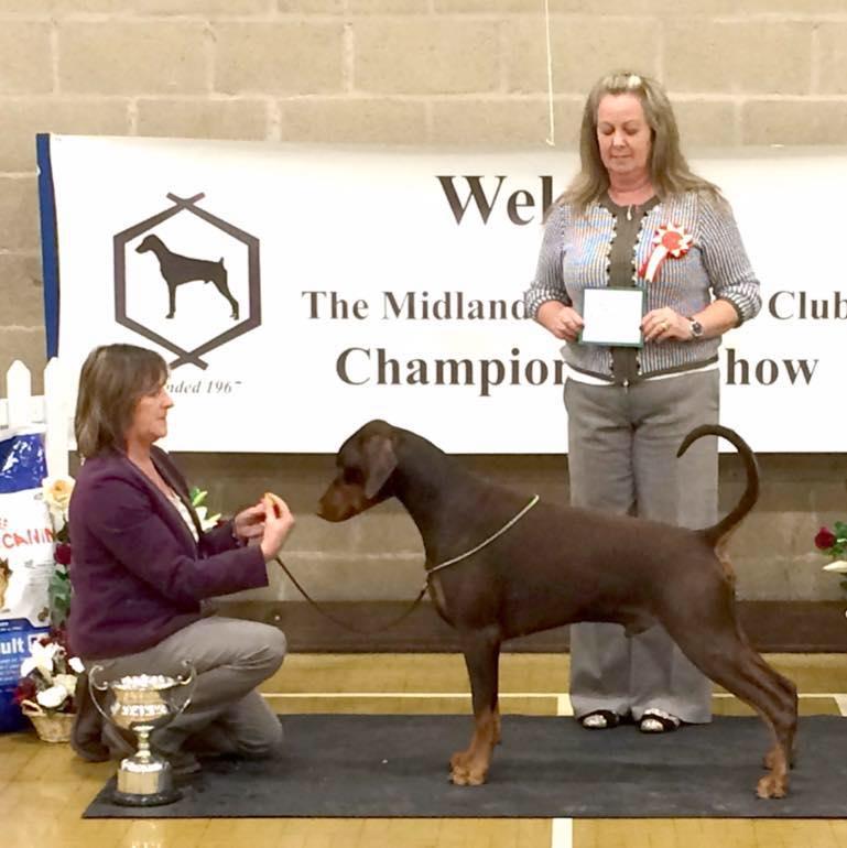 MDC 151115 Hugo & Jo with Breed Specialist Judge Sue Mycroft