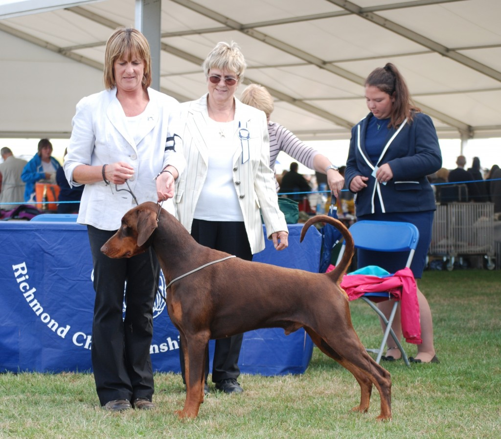 Jo & Hugo with Breed Specialist judge Sylvia Caldicot who awarded Hugo with his 3rd CC giving him his Champion Title